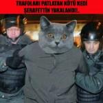 istanbul-teknik-servis-kedi-caps0