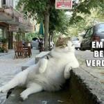 istanbul-teknik-servis-kedi-caps3
