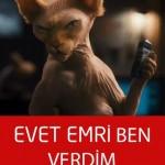 istanbul-teknik-servis-kedi-caps7