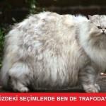istanbul-teknik-servis-kedi-caps9